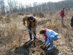 plantare copaci aiud 07