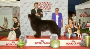 royal canin alba iulia
