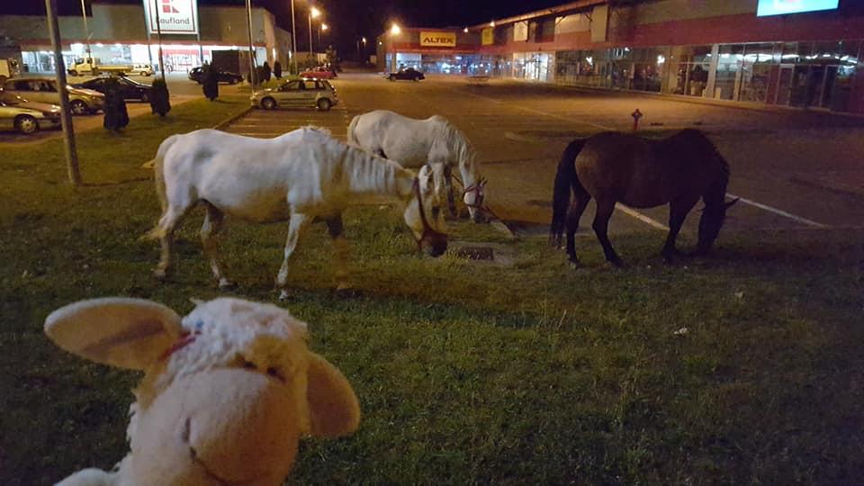 Foto: 5 cai frumoși, în parcarea Kaufland din Alba Iulia